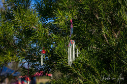 02 Yarn Art and Decorated Trees_1367