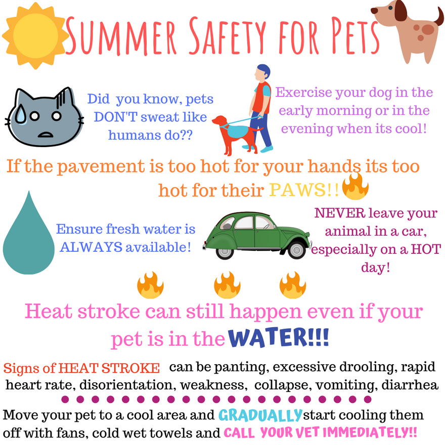 Summer Safety for Pets.png
