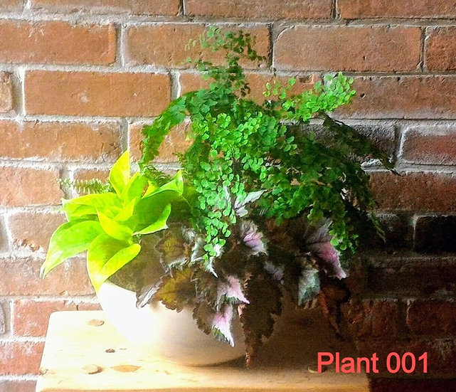 Plants from