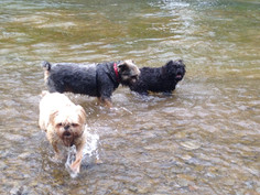 Dolly, Lilly and Lola enjoying the creek