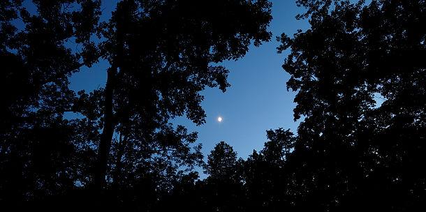 Moonlight over The DeWitt