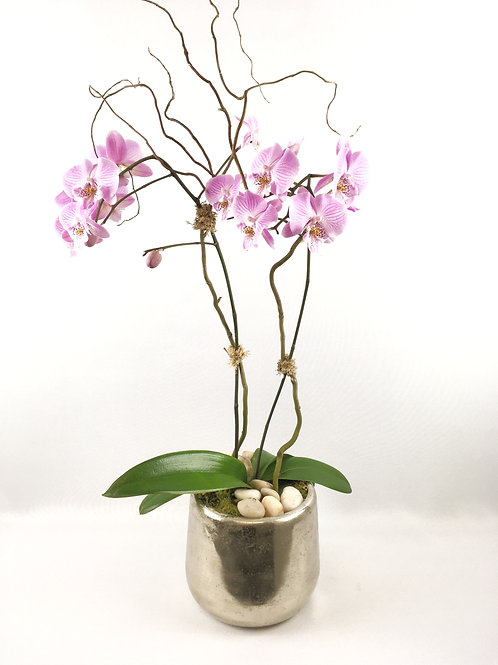 Orchid Plant in Silver Metal Vase starting at $100