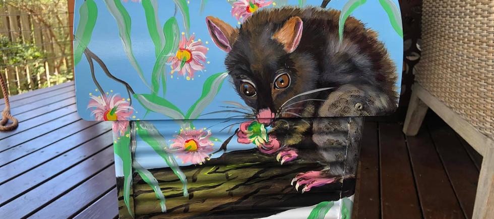 Kooka possum 2.jpg