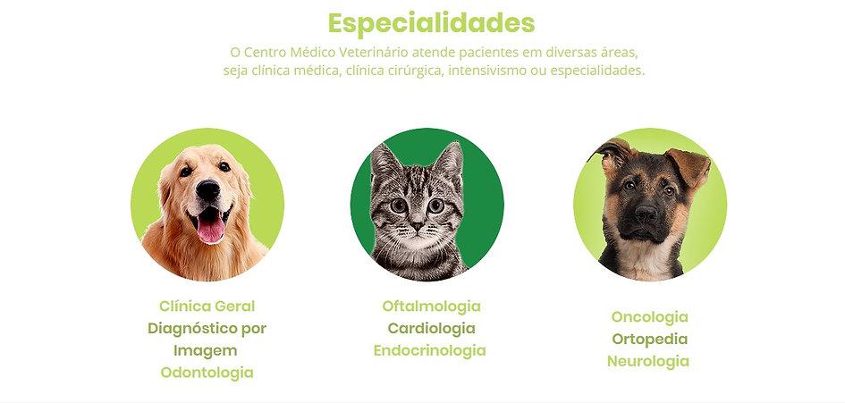 gato e cão.jpg