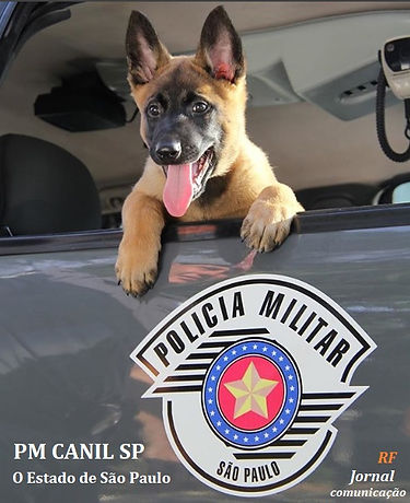 PM Canil SP.jpg