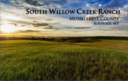 1 South Willow Cover .png