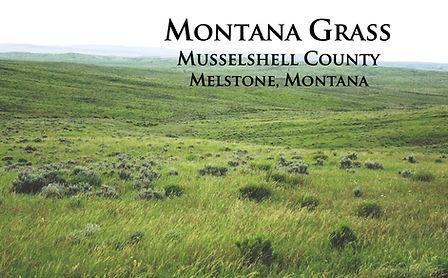 Montanagrass