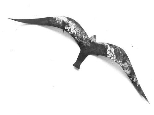 ALBATROS 50cm Envergure