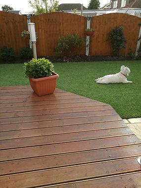 artificial grass in garden with dog