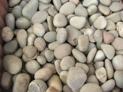 Scotch Pebbles