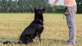Dog-Training-Stay.jpg