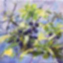 purple berries.jpg