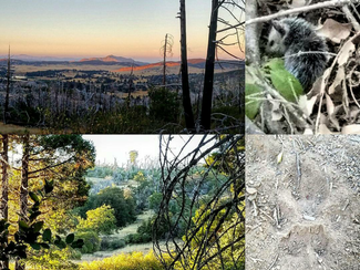Find Nature In San Diego - Venture Out And Hike | Force0six