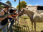 State fair visitors meeting a horse