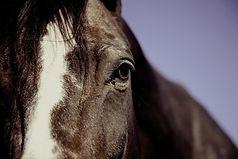 horse Image by Markus Spiske