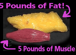 Not All Fats Are Created Equal!