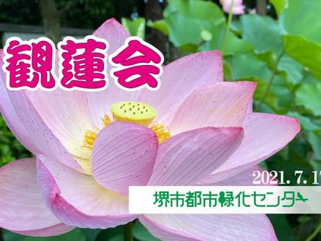 本日のハスの開花の様子