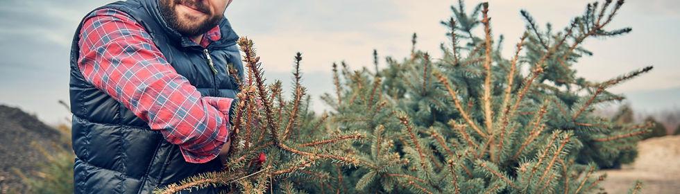 Loading Christmas Trees_edited.jpg