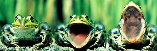 funny-frog-3-facebook-cover-timeline-ban