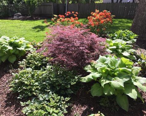 Backyard (7).jpg