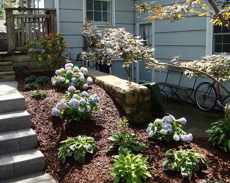 Backyard (41).jpg