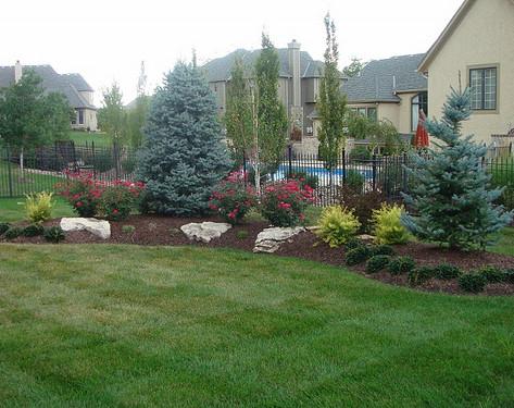 Backyard (46).jpg