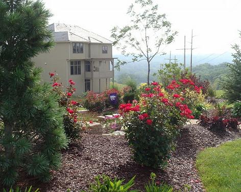 Backyard (33).jpg