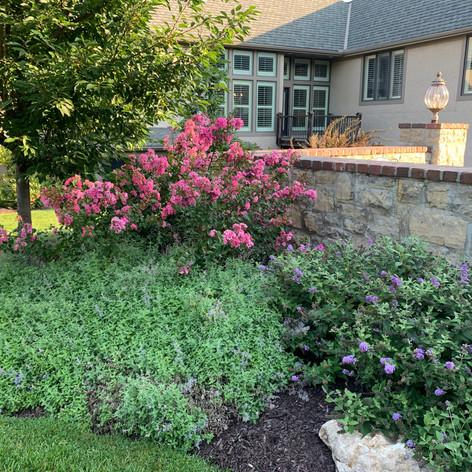 Backyard (55).JPG