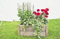 flower feature wooden crate michaella lu