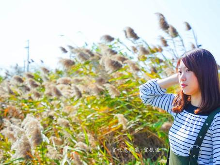 【旅遊】 台南~生活手扎-台南旅遊/台江國家公園-美翻的水上高腳屋,快來拍照唷