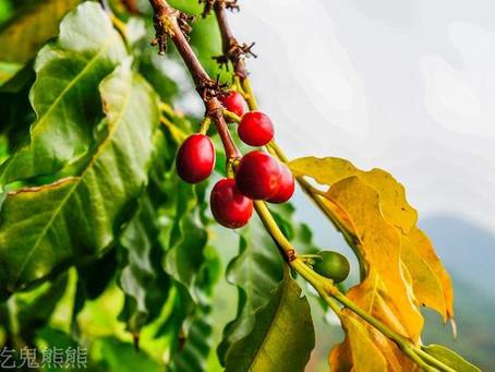 【旅遊】台南~生活手扎-台南東山區旅遊  仙湖休閒農場