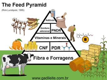 Piramide da alimentação das vacas de leite