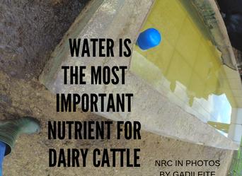 87% do leite é água!