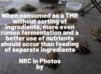 NRC in Photo