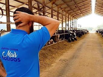 O princípio de pareto e a vaca de leite