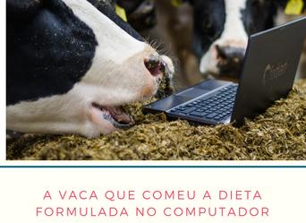 A vaca que comeu a dieta formulada.