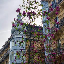 Promoción y  Construcción de 3 viviendas de lujo en el corazón de la Ciudad (Donostia - San Sebastián)