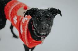 PIPER, SNOW SHOOT