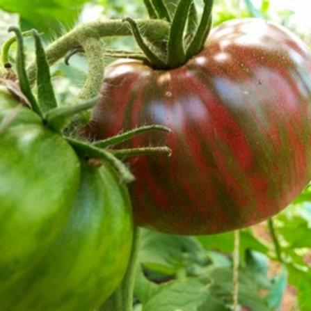 Organic Tomatoes - Medium/Large