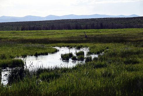 Wetlands Photo.JPG