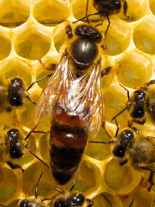 Hive One