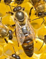 Hive Three