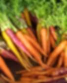 YF_D_Product_Carrots.png