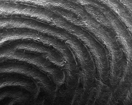 Fingerprint Scan_9.jpg