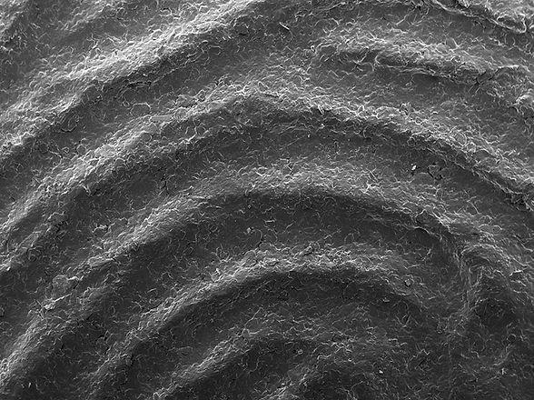 Fingerprint Scan_5.jpg