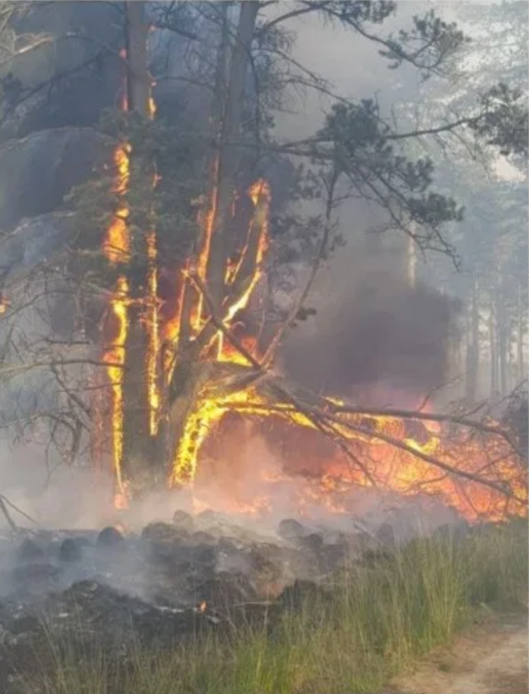 Wareham Forest Fire, May 2020, photo credit Jason Rogers, Station Manager, Dorset & Wiltshire Fire and Rescue Service