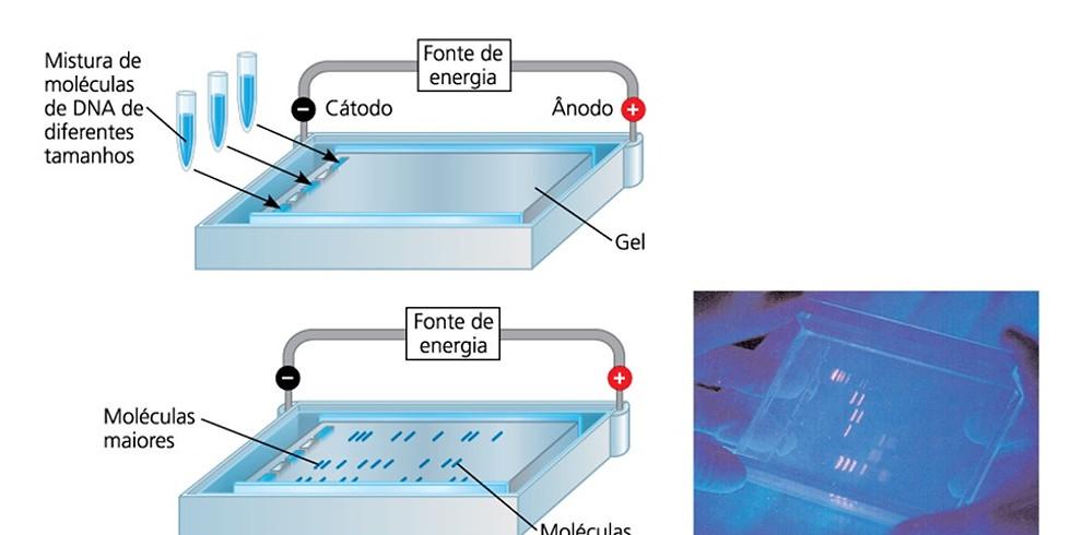 Caracterização genética molecular de procedências e progênies de Parkia platycephala Benth.