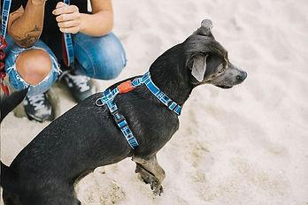 peitoral-h-para-cachorros_star-wars_r2-d