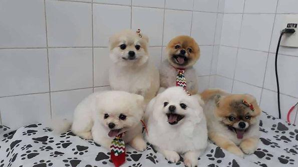 tosa-cachorro (3).jpeg