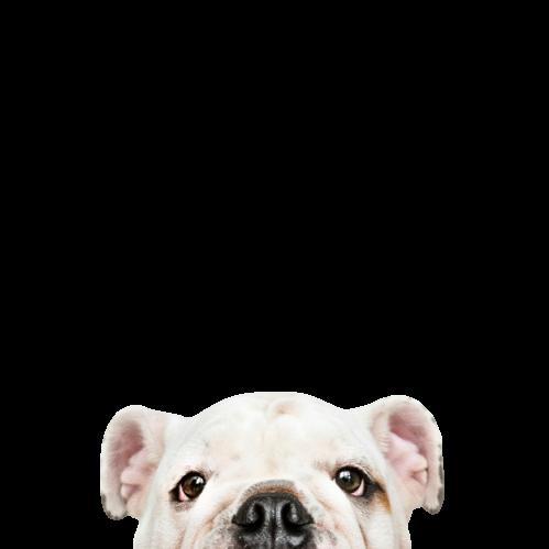 pet-shop-online (3).png